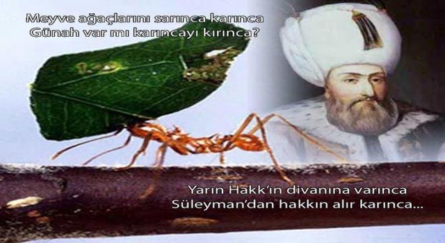 Süleyman'dan hakkın alır karınca