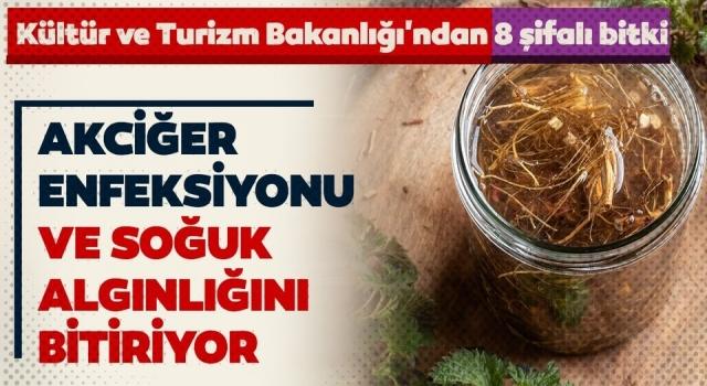 Kültür ve Turizm Bakanlığı'ndan 8 şifalı bitki!