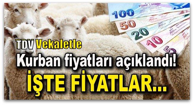 Türkiye Diyanet Vakfı Vekaletle Kurban Fiyatları açıklandı