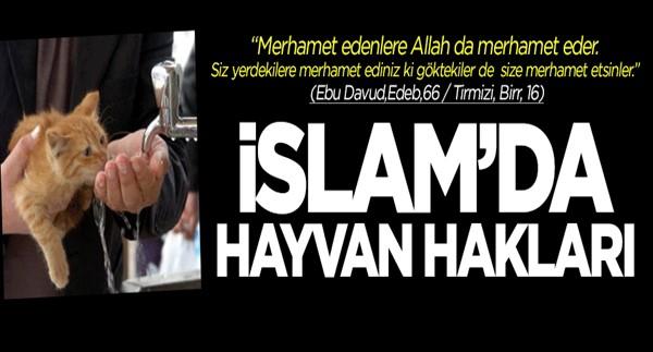 İslam\'da hayvan hakları ve hayvanlara eziyetin cezası